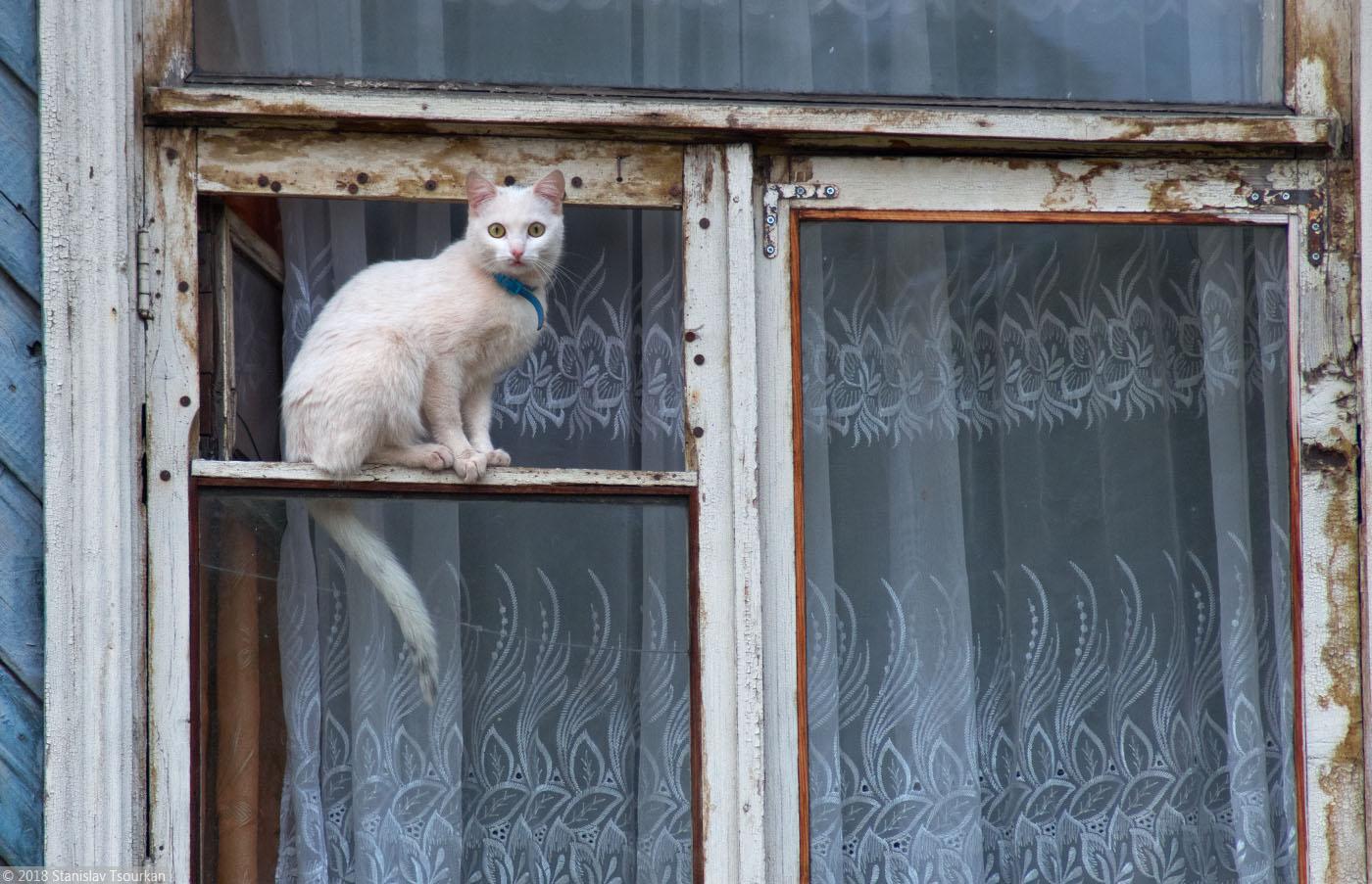 Пудож, Карелия, республика Карелия, котик