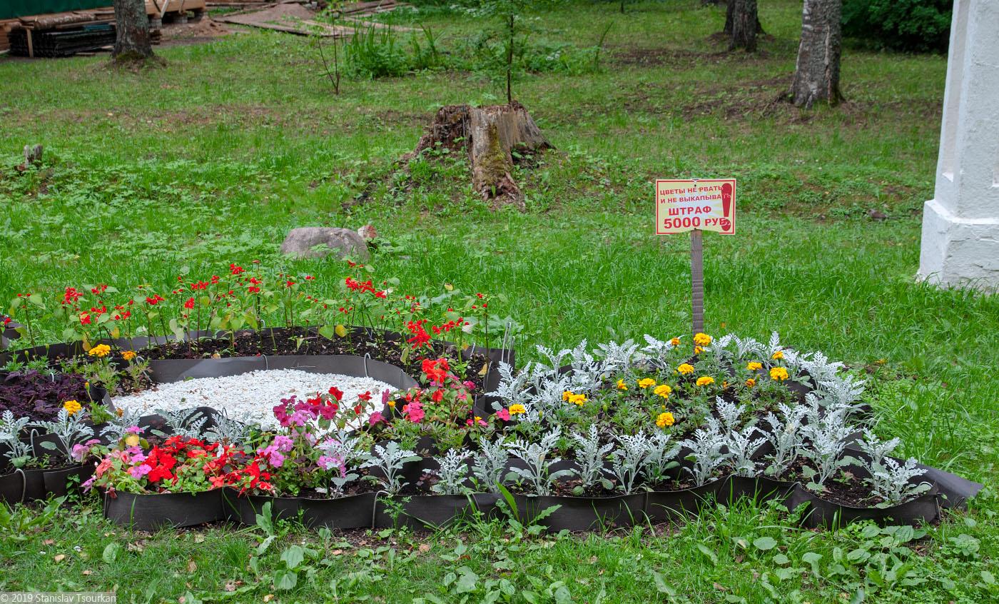 Вологодская область, Вологодчина, Великий устюг, Русский север, цветы не рвать