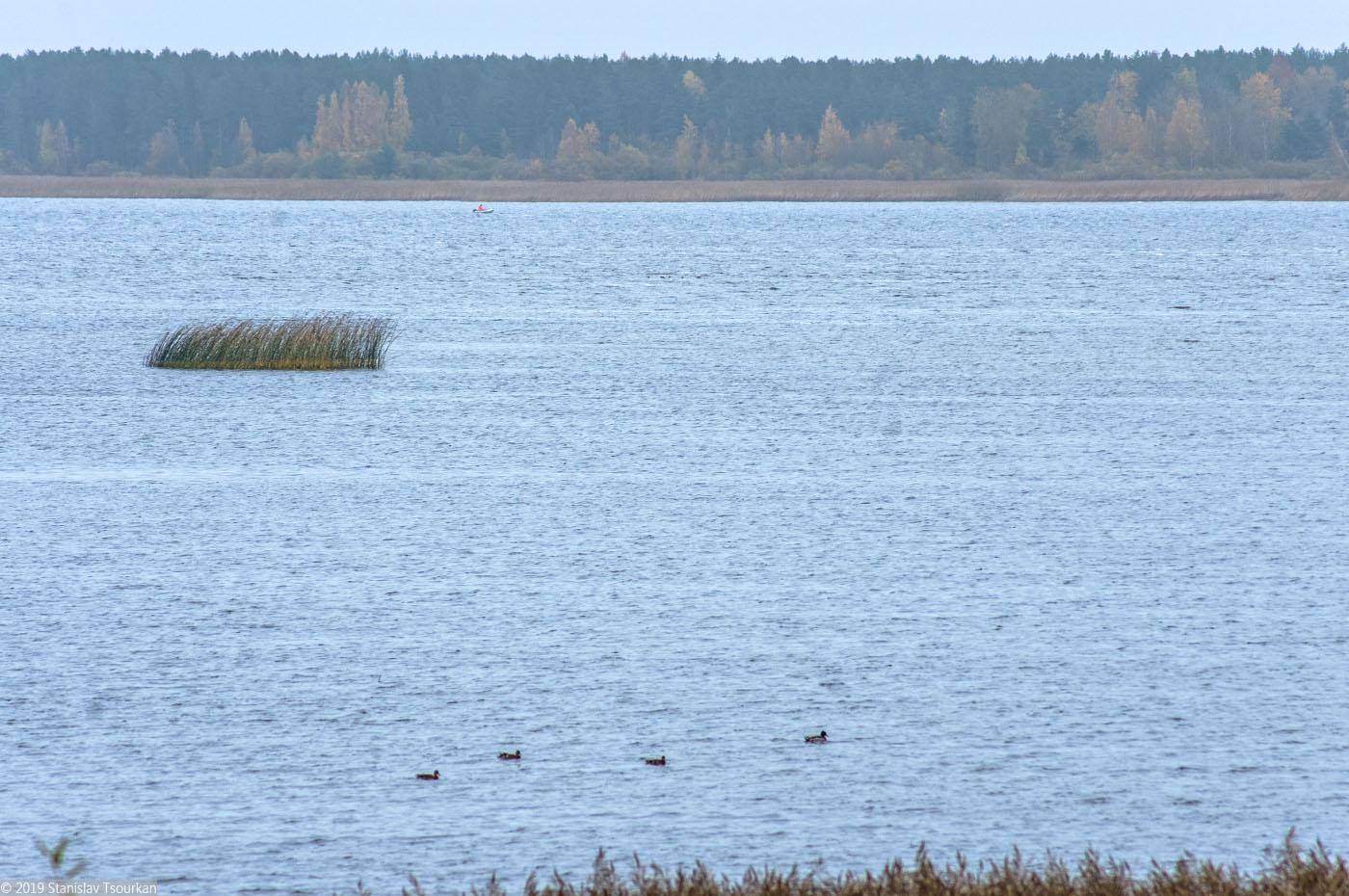 Весьегонск, утки, Рыбинское море, Рыбинское водохранилище