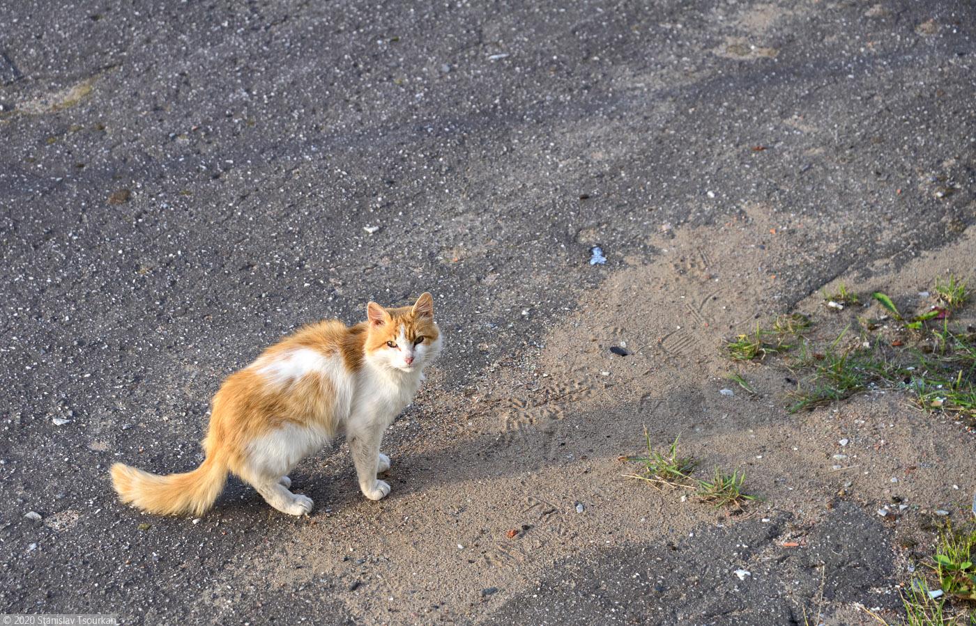 Лахденпохья, Карелия, республика Карелия, Яккима, станция Яккима, железная дорога, котик, рыжий котик