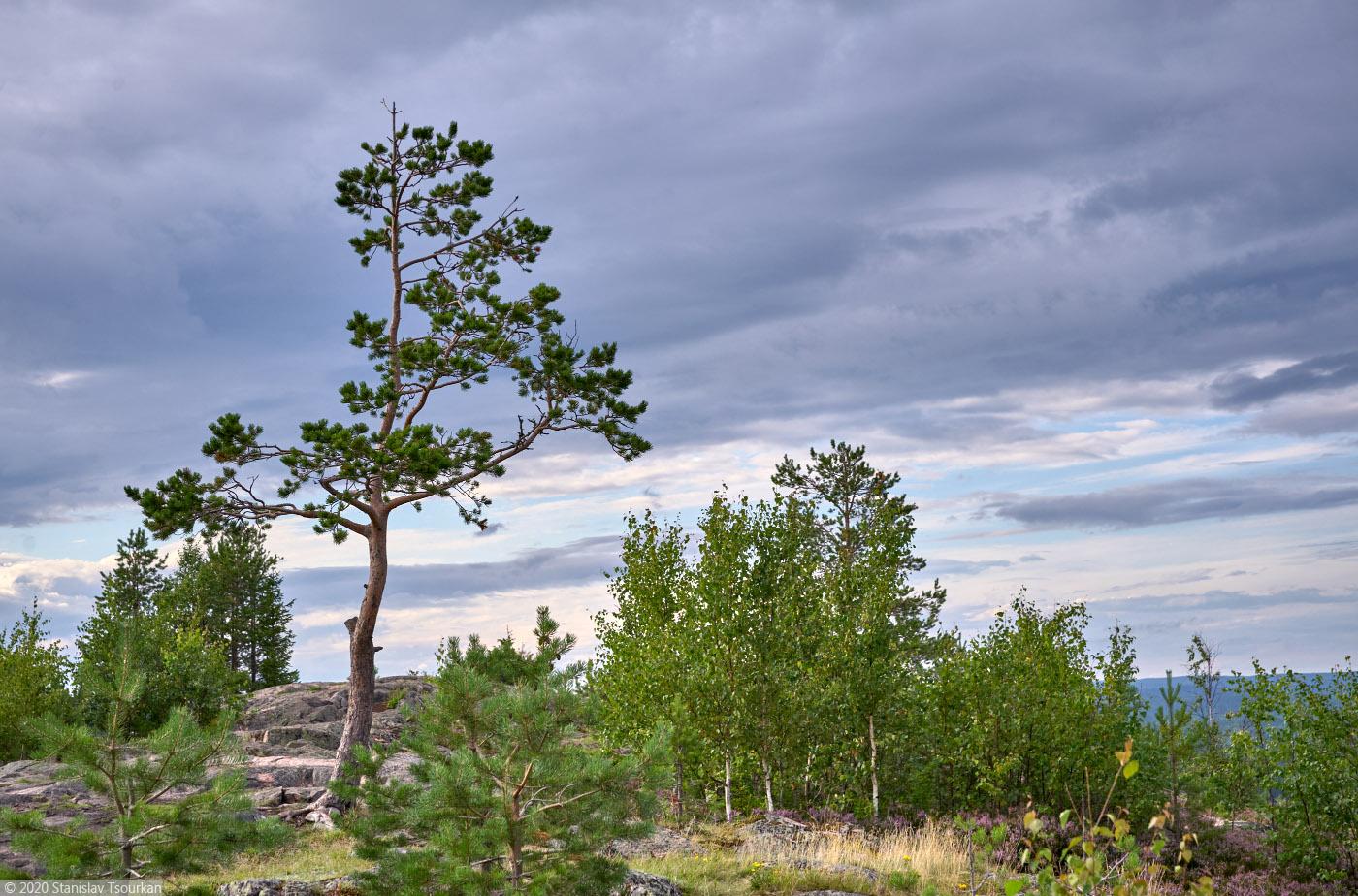 Карелия, республика Карелия, гора, Хийденвуори, пейзажи, природа, сосна